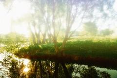 Foggy morning (prokhorov.victor) Tags: утро природа солнце дерево туман пейзаж озеро отражение деревья
