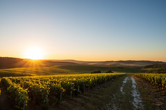 Golden morning (ZeGaby) Tags: champagne landscape leverdesoleil marne naturephotography paysage paysagedechampagne pentax2470mm pentaxk1 sun sunlight sunrise vignoble vines vineyards