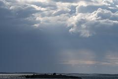 Kamera-67 goes Åland - Day 5 (aixcracker) Tags: nikond500 sigmas150600mmf563 nature natur luonto bird fågel lintu june juni kesäkuu summer sommar kesä suomi finland europe europa eurooppa archipelago skärgård sea hav meri saaristo island ö saari åland ahvenanmaa aaland ax korppo kökar