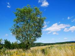 1030837 (GKRSP55) Tags: bluesky bostalsee tree naturparksaarhunsrück