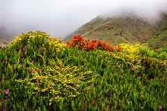 (Abel AP) Tags: flowers wildflowers mountains fog nature outdoor bigsur garrapatasstatepark montereycounty california usa abelalcantarphotography