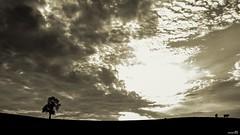 La nuit où le jour s'est levé. (Un jour en France) Tags: noiretblanc noiretblancfrance black canoneos6dmarkii canonef1635mmf28liiusm campagne contrejour vache cow bocage ciel cielpaysage landscape