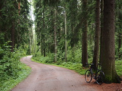 2019 Bike 180: Day 151, July 7 (olmofin) Tags: 2019bike180 finland bicycle polkupyörä forest metsä path keskuspuisto central park