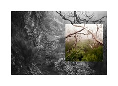 Nature trip (AStomatin) Tags: island madeira portugal bus travel analog film canon canonet ql17 kodak ektar 100 mountain rain fog mist color bnw monochrome chinon ce4 adox silvermax