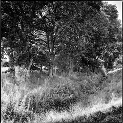 A corner of Strensall Common (jhotopf) Tags: berggerpancro400 hasselblad 80mmplanarf28 blackwhite blancoynegro noiretblanc lomography digitalizer strensallcommon uk northyorkshire gb