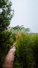 Wooden roads (himanshu_07) Tags: wooden road way positive green nature outdoor outside sky rain sony walk alone solitude wildlife animal love path trip trek