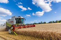 barley harest (Fotos aus OWL) Tags: claas lexikon mähdrescher ernte harvest landwirtschaft agriculture combine