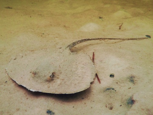 It's the Stingray That You Don't See