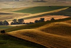 Patchwork (Fabrizio Massetti) Tags: tuscany toscana pienza panorami nikond3 fabriziomassetti famasse countryside colored landscape landscapes light