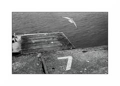Lorient, zone portuaire (Punkrocker*) Tags: nikon fm2n nikkor 50mm preai 5014 film kodak trix 400 nb bwfp bnw monochrom harbor port keroman seagull mer sea lorient morbihan bretagne brittany france