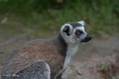 BVG_9116 (Borreltje.com) Tags: beeksebergen dierentuin safari animals animal dieren dier nikon photography