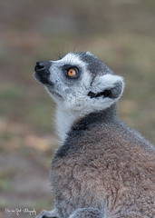 BVG_9060 (Borreltje.com) Tags: beeksebergen dierentuin safari animals animal dieren dier nikon photography
