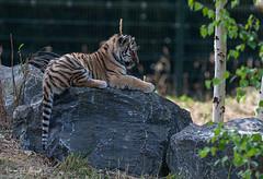 BVG_9001 (Borreltje.com) Tags: beeksebergen dierentuin safari animals animal dieren dier nikon photography