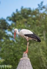 BVG_8897 (Borreltje.com) Tags: beeksebergen dierentuin safari animals animal dieren dier nikon photography