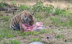 BVG_8324 (Borreltje.com) Tags: beeksebergen dierentuin safari animals animal dieren dier nikon photography