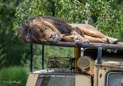 BVG_9203 (Borreltje.com) Tags: beeksebergen dierentuin safari animals animal dieren dier nikon photography