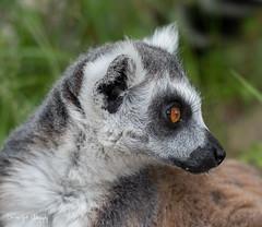 BVG_9145 (Borreltje.com) Tags: beeksebergen dierentuin safari animals animal dieren dier nikon photography