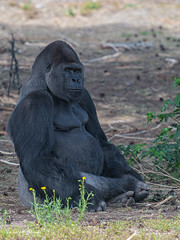 BVG_8993 (Borreltje.com) Tags: beeksebergen dierentuin safari animals animal dieren dier nikon photography