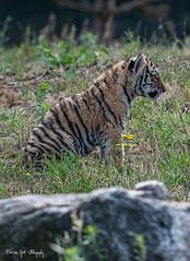 BVG_8085 (Borreltje.com) Tags: beeksebergen dierentuin safari animals animal dieren dier nikon photography