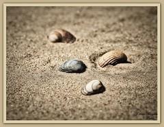 Am Strand(9)-Langeoog (Jürgen von Riegen) Tags: water strand landscape island deutschland wolken insel ostfriesland landschaft langeoog beach clouds germany lumix fourthirds mirrorless micro43 lumixg9 shell muschel fourthirdsstrand