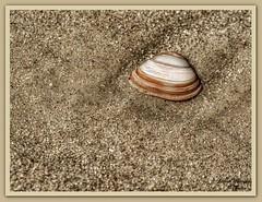 Am Strand(8)-Langeoog (Jürgen von Riegen) Tags: water strand landscape island deutschland wolken insel ostfriesland landschaft langeoog beach clouds germany lumix fourthirds mirrorless micro43 lumixg9 shell muschel fourthirdsstrand