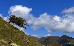 Reaching out (Wildlife & Nature Photography) Tags: tree lakedistrict nationalpark thelakedistrict cumbria landscape landscapephotography england crummockwater mountains sky clouds nature outdoors hiking lonetree reachingout rocks lakedistrictnationalpark sentinel unesco worldheritagesite