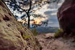 The small plant in the stone (aomorin) Tags: sächsische schweiz sächsischeschweiz saxon switzerland saxonswitzerland sunset plants bokeh samyang 20mm f18