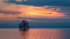 Villeneuve (marceloaguilarsuisse) Tags: solitary tree lake