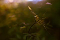 new life (Nathaniel Macrae) Tags: nikon d3 nikond3 nikonphotography nikonphotographer nikoncamera nikoneurope nikonuk iamnikon green sunset goldenhour