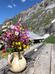 welcome Flühalp (Rosmarie Voegtli) Tags: flowers bouquet strauss flühalp table tisch mountains sky hiking rest pause colors odc ourdailychallenge iconsofsummer inexplore