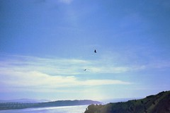 imm033 (rugby#9) Tags: water hills hill california us america buzzards condor birds clouds cloud sky bluesky usa