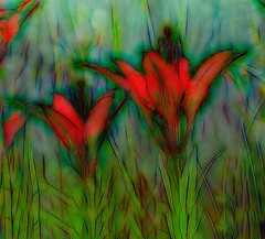Hot summer (N.Clark) Tags: hss happysliderssunday natureabstract floralabstract artbynature wildflowers manitobawildflowers westernwoodlilylilliumphiladelphicum lilies postprocessing topazstudio bright summer colourshot vibrant
