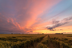 Summer Sunset (mesocyclone70) Tags: sunset wheat landscape countryside colors farm holland netherlands
