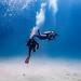 Scuba Dive Lady Elliot Island-7