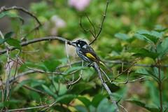 (GrantJB) Tags: nature animals bird bushland