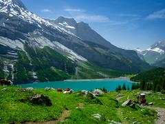 20190626 132931 Bärentrek (57 von 76) (chrhuber) Tags: 2019 6tag alpen bern bärentrek oeschinensee oeschinenseerundweg schweiz urlaub viaalpina wandern wandertour kandersteg kantonbern