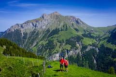 20190625 114012 Bärentrek (41 von 76) (chrhuber) Tags: 2019 5tag alpen bern bärentrek griesalpaabebergkiental schweiz urlaub viaalpina wandern wandertour kiental kantonbern