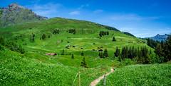 20190624 122929 Bärentrek (37 von 76) (chrhuber) Tags: 2019 4tag alpen bern bärentrek mürrenrotstockhüttemürren panorama schweiz urlaub viaalpina wandern wandertour mürren kantonbern