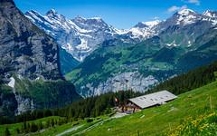 20190623 114516 Bärentrek (27 von 76) (chrhuber) Tags: 2019 3tag alpen alpiglenmürren bern bärentrek schweiz urlaub viaalpina wandern wandertour wengenbe kantonbern