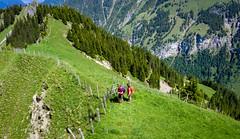 20190625 114523 Bärentrek (42 von 76) (chrhuber) Tags: 2019 5tag alpen bern bärentrek griesalpaabebergkiental schweiz urlaub viaalpina wandern wandertour kiental kantonbern