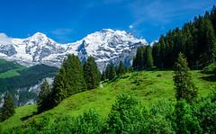 20190623 154936 Bärentrek (31 von 76) (chrhuber) Tags: 2019 3tag alpen alpiglenmürren bern bärentrek schweiz urlaub viaalpina wandern wandertour mürren kantonbern