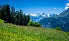20190623 140548 Bärentrek (29 von 76) (chrhuber) Tags: 2019 3tag alpen alpiglenmürren bern bärentrek schweiz urlaub viaalpina wandern wandertour wengenbe kantonbern