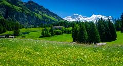 20190623 140535 Bärentrek (28 von 76) (chrhuber) Tags: 2019 3tag alpen alpiglenmürren bern bärentrek schweiz urlaub viaalpina wandern wandertour wengenbe kantonbern