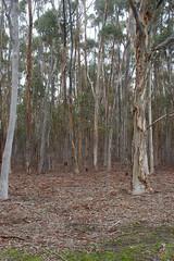 DSC_0040 (GrantJB) Tags: nature landscape bushland