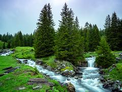 20190622 104555 Bärentrek (16 von 76) (chrhuber) Tags: 2tag 2019 alpen bern bärentrek rosenlauigrindelwald schweiz urlaub viaalpina wandern wandertour meiringen kantonbern