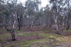 DSC_0025 (GrantJB) Tags: nature landscape bushland