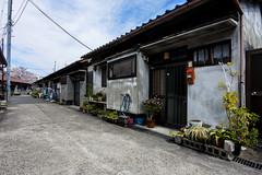 海塚長屋 (m-louis) Tags: 6713mm j5 nikon1 rsg house japan kaizuka osaka plant 大阪 家 日本 海塚 貝塚 長屋 集合住宅