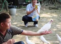 P1091253_LR (enno7898) Tags: panasonic lumix lumixg9 dcg9 olympus mzuiko 1240mm f28 animal pigeon