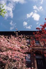 Pink (JoelZimmer) Tags: 24mmf28 brooklyn florals newyork nikond750 parkslope