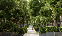 This time in summer (Ronnie Gaye) Tags: carrerdelafabrica palmademallorca green trees summer
